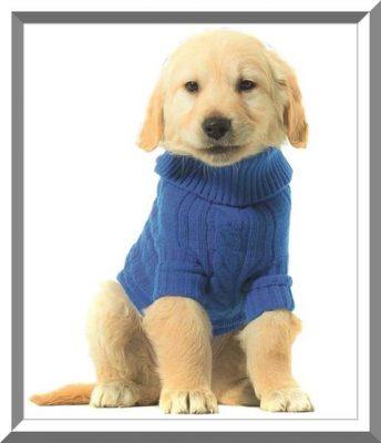 sweaters para perros patrones