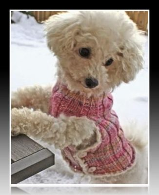 ropa para perros moldes