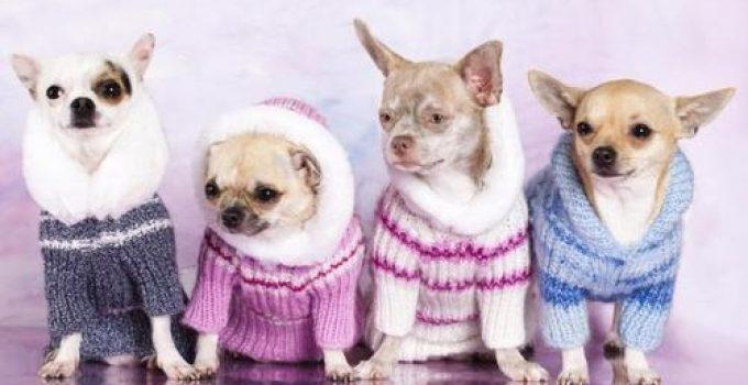 abrigo para mascotas