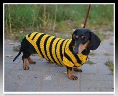 chompa de lana para perro salchicha