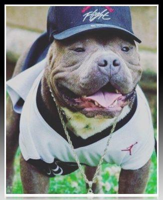 disfraz de beisbol para pitbull