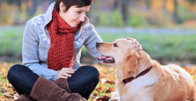 como cuidar a un perro