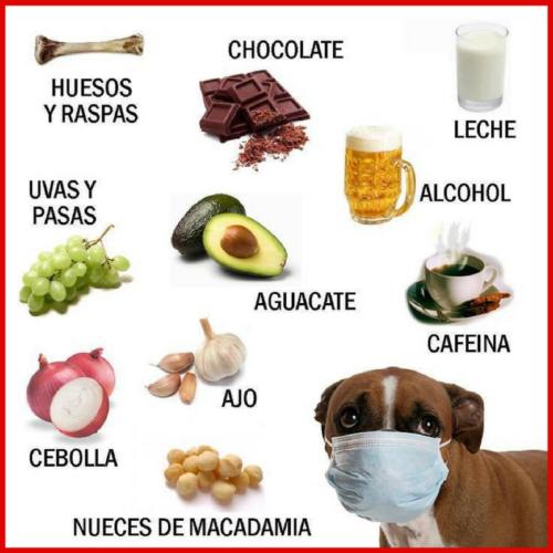 comida dañina para perros