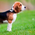 Alimentación según la edad de tu perro
