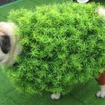Disfraces Para Perros Pug