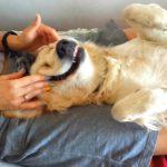 Cómo aplicar masajes a un perro