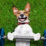 Cómo ejercitar un perro sin salir de casa