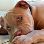 El carácter y temperamento en los perros