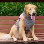 Chalecos para perros labradores