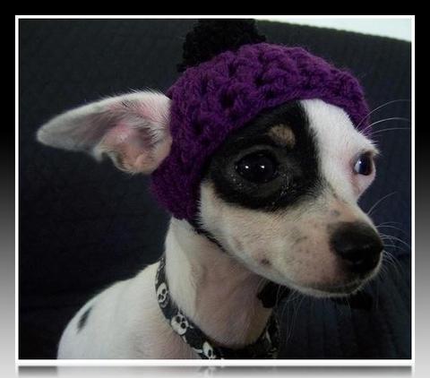 8efffe307913 Gorros para perros chihuahuas para el frio | Imágenes de Ropa Para ...