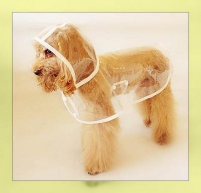 Imágenes de capas para mascotas