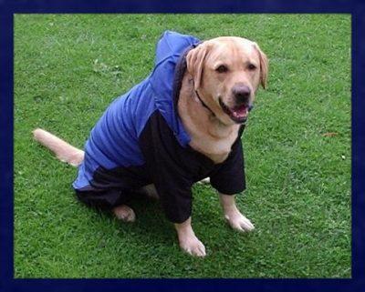 abrigos impermeables para perros tallas grandes
