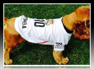 camisetas para perritos