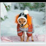 Ropa de frio para perros abrigos e impermeables