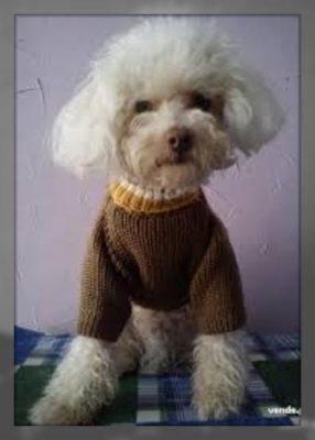 como hacer ropa para perros pequeños machos