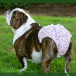Ropa interior para perros ideas geniales