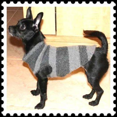 modelos de ropa de lana para perros