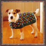 Ropa de perritos pequeños al alcance de tu bolsillo