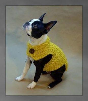 moldes para ropa de perros machos pequeños