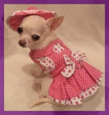 patrones ropa para perritas chihuahua
