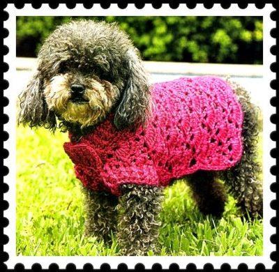 ropa de lana para perros