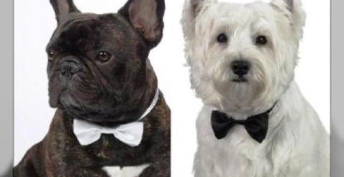 ropa elegante para perros grandes