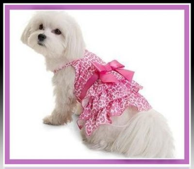 ropa para cachorritas