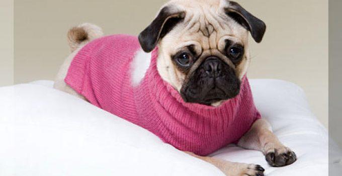 ropa para cachorrosbeagle
