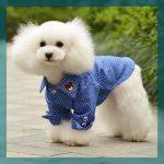 Camisas para perros machos cuatro modelos unicos