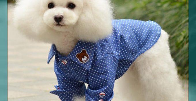 ropa para perros machos moldes