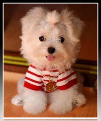 ropa para perros pequeños barata