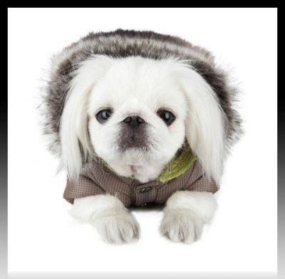 ropa para perros pequeños moldes