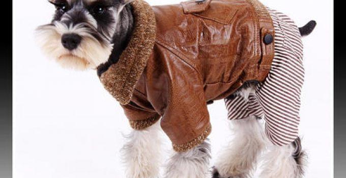 ropa para perros schnauzer miniatura