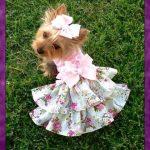 Vestidos de mascotas lindos para escoger
