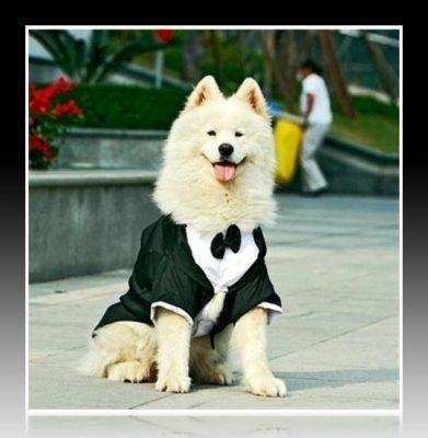 vestidos para perros