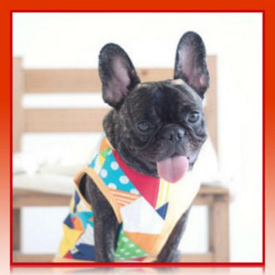alta moda canina