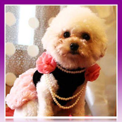 moda canina 2016