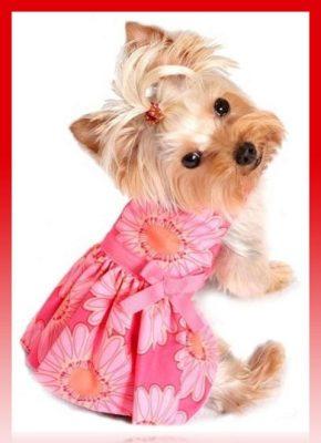 moldes de vestidos para perritas pequeñas