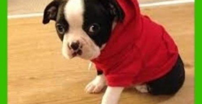 sudaderas para perros adidas