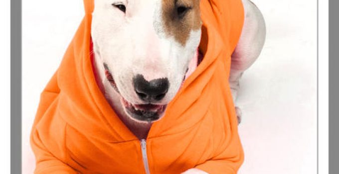 sweaters para perros