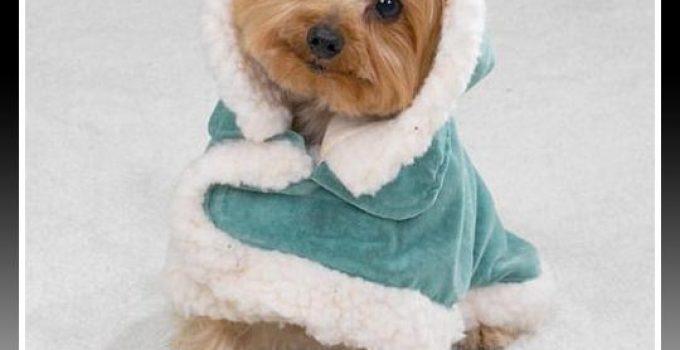 abrigo con gorro para shitzu