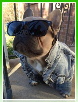 chaqueta para bulldog frances