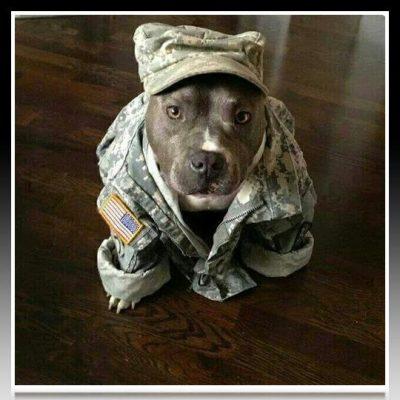 ropa camuflada para pitbull