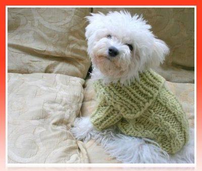 ropa de lana para bichon maltes
