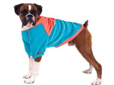 ropa para perro boxer