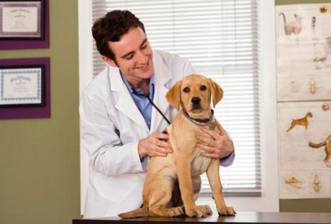 veterinario de perros