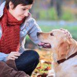 Consejos sobre cómo cuidar a un perro