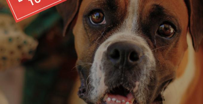 cosas que no debe comer tu perro