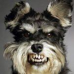 Cuando tu perro y tu pareja no son amigos