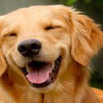 El perro indicado para ti, según tu signo